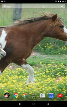 Cute Horses Live Wallpeper poster