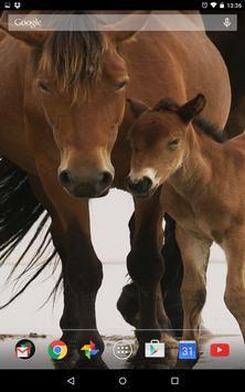 Cute Horses Live Wallpeper apk screenshot