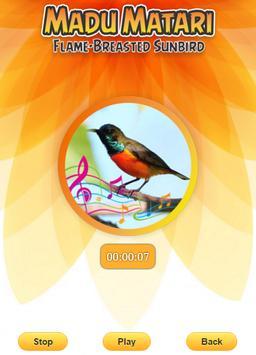 Flame-breasted sunbird screenshot 3