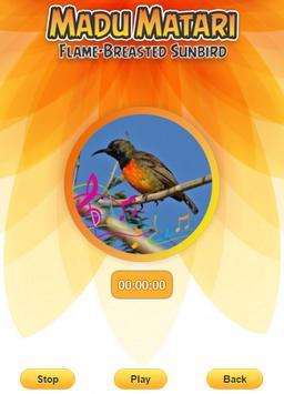 Flame-breasted sunbird screenshot 1