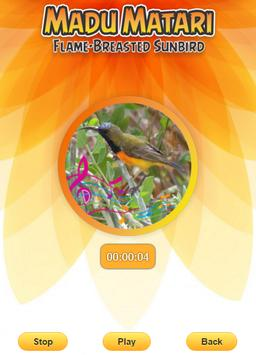 Flame-breasted sunbird screenshot 2