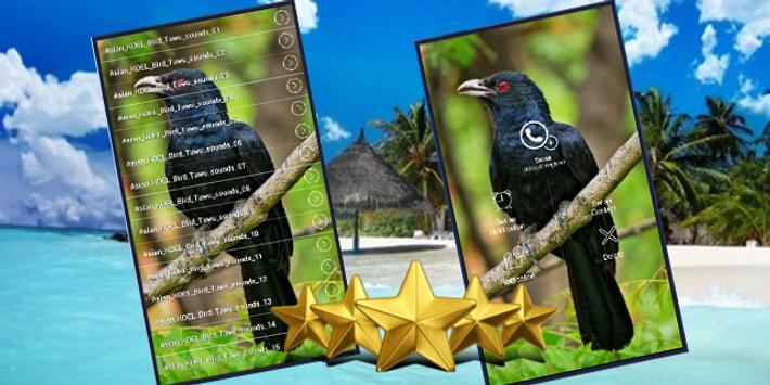 Asian Koel Bird Sounds poster