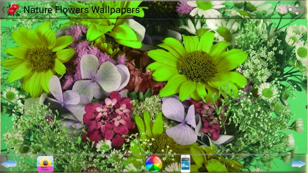 Nature Flowers Wallpapers screenshot 17