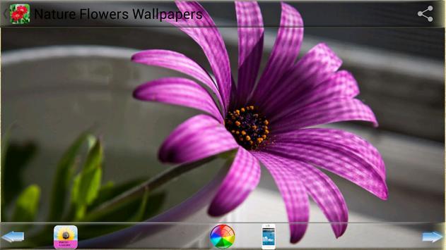 Nature Flowers Wallpapers screenshot 10
