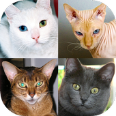 Cats Quiz - Guess Photos of All Popular Cat Breeds icon