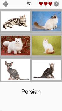 Cats Quiz - Guess Photos of All Popular Cat Breeds screenshot 3
