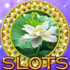 Slots 2017:Free Slot Machines icon