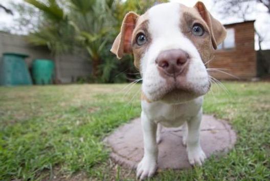 Cute Dogs Wallpapers Apk Screenshot