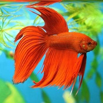 Ornamental Fish Culture screenshot 4