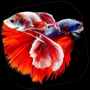 Ornamental Fish Culture poster