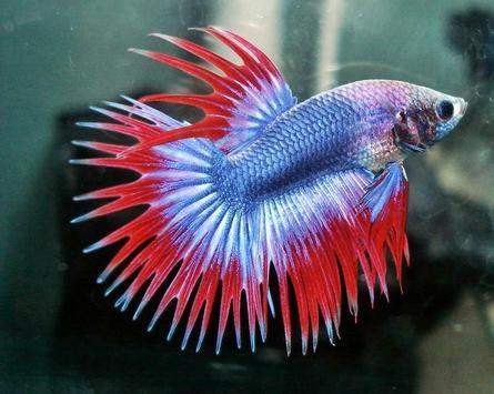 Ornamental Fish Culture screenshot 1