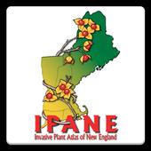IPANE icon