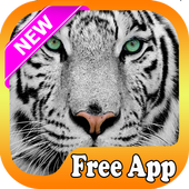 Tiger Live Wallpaper 2017 icon