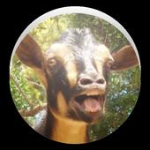 Random Goat sound icon