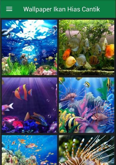 Unduh 9400 Gambar Ikan Hias Cantik HD Terpopuler