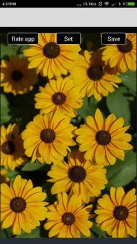 Beautiful Flowers Hd Wallpapers screenshot 7
