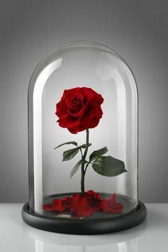 Rose Flower Wallpaper HD Best and Most Beautiful screenshot 6