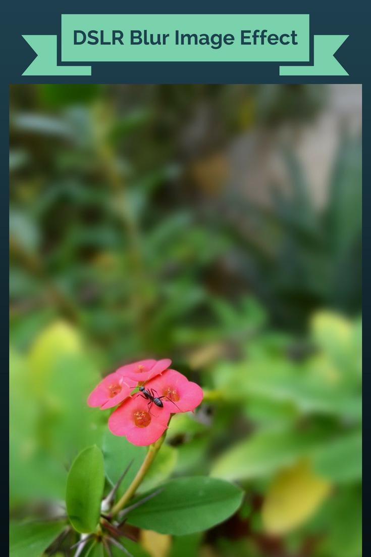 🌱 Dslr background photos download | 100+ HD Wallpaper