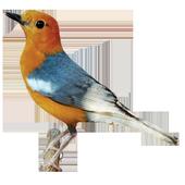 BurungBerkicau icon