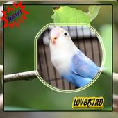 Master Ocehan Lovebirds Terbaik icon