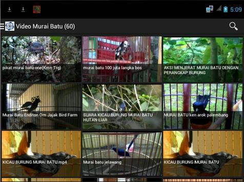 Burung Murai Batu screenshot 1