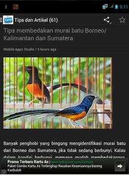 Burung Murai Batu screenshot 3