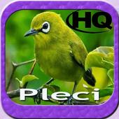 Master Kicau Pleci HD icon