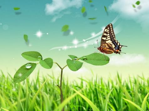 Butterfly Wallpapers for Chat poster