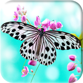 Butterfly Wallpapers icon