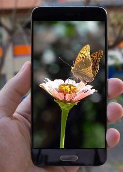 Butterfly Wallpapers apk screenshot