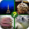 Guess The Picture Quiz: The Image Guessing Quest icône