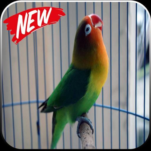 Kicau Suara Burung Lovebird Mp3 For Android Apk Download