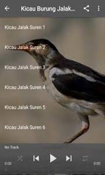 Master Burung Jakal Suren MP3 poster
