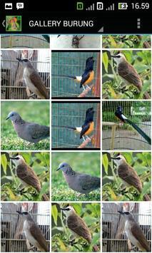 Kicauan Master Burung apk screenshot