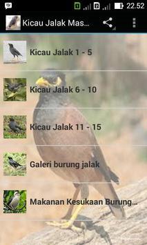 Kicau Jalak Master poster