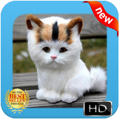 Baby Cat Wallpapers icon
