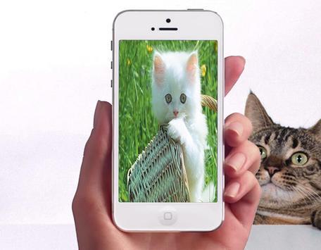 Baby Cat Wallpapers screenshot 2