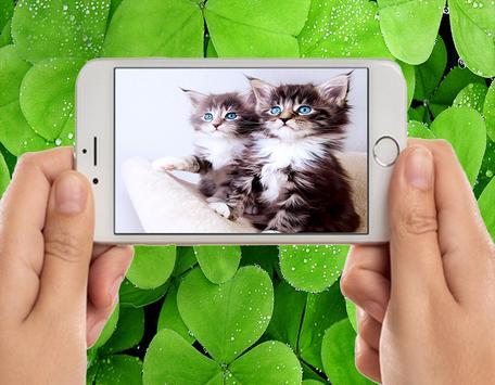 Sweet Baby Cat Image screenshot 1