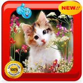 Baby Cat Photo Frames icon