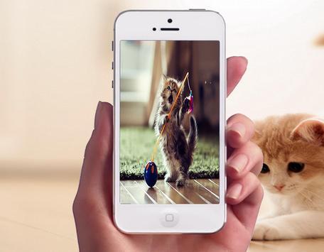 Baby Cat Photo Frames apk screenshot