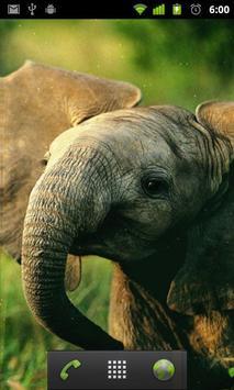 Fond D Ecran Bebe Elephant Pour Android Telechargez L Apk