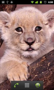 baby lion wallpapers free apk screenshot