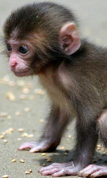 Lwp الطفل القرد الملصق