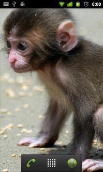 Lwp الطفل القرد تصوير الشاشة 1