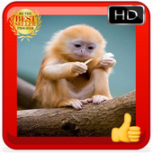 Baby Monkey Wallpapers icon
