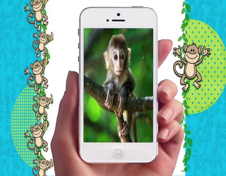 Baby Monkey Wallpapers poster