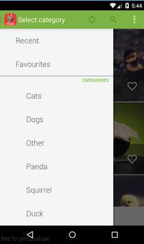 Baby Animals Wallpapers HD apk screenshot