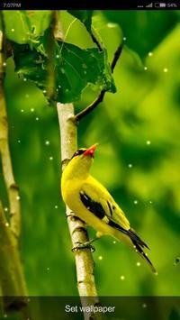 Birds Tweet Ringtones apk screenshot