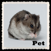 Pet Wallpapers LWP icon