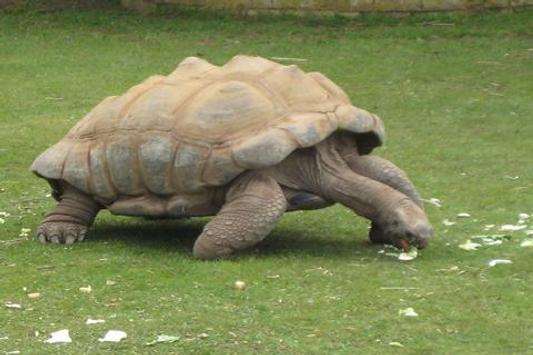 Tortoise Wallpaper LWP apk screenshot